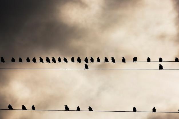 Ptak sfotografowany podczas odpoczynku na linii elektrycznej