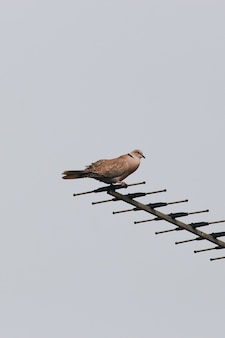 Ptak siedzący na antenie z szarym niebem w tle