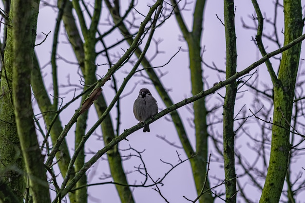 Ptak siedzący na gałęzi drzewa o świcie
