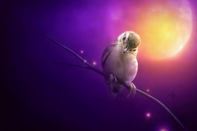 Ptak siedzi na gałęzi drzewa w świetle księżyca