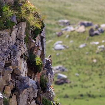 Ptak siedzi na krawędzi klifu
