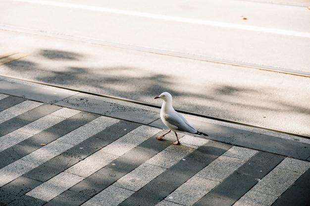 Ptak spacer na ścieżce