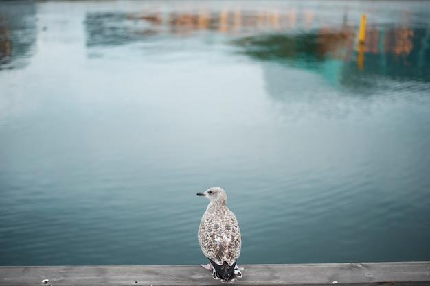 Ptak stojący na betonie w pobliżu rzeki