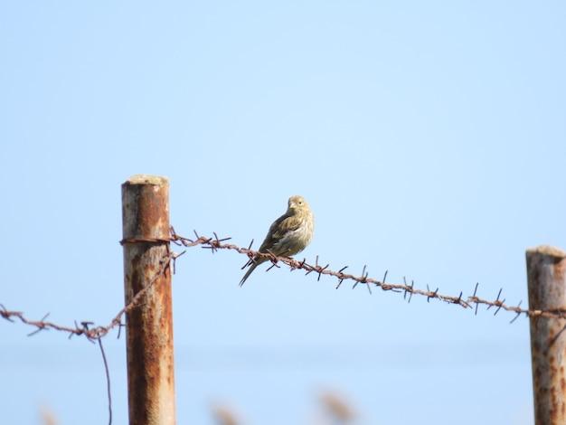 Ptak stojący na drucie z błękitnym niebem