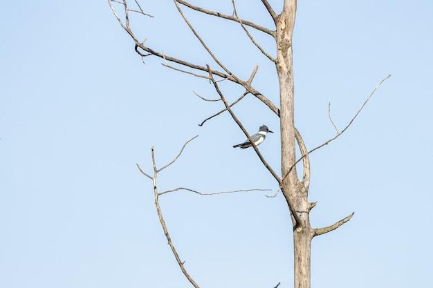 Ptak stojący na gałęzi drzewa na tle błękitnego nieba