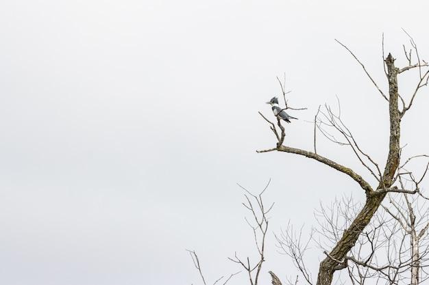 Ptak stojący na gałęzi drzewa pod pochmurnym niebem