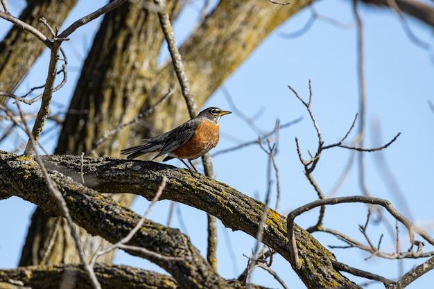 Ptak stojący na gałęzi drzewa