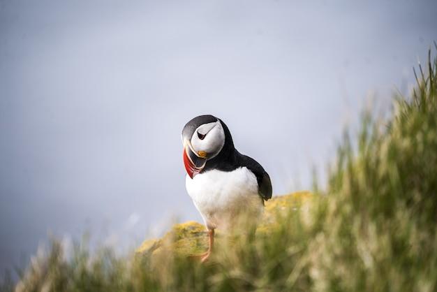 Ptak stojący na trawie