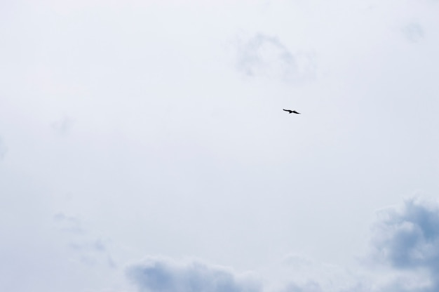 Ptak sylwetka na niebie