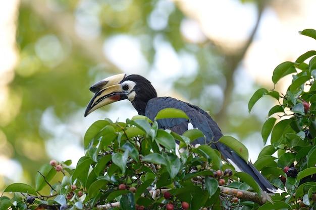 Ptak w lesie