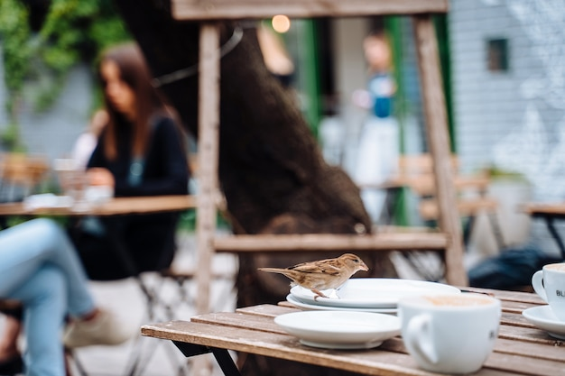 Ptak w mieście. wróbli obsiadanie na stole w plenerowej kawiarni