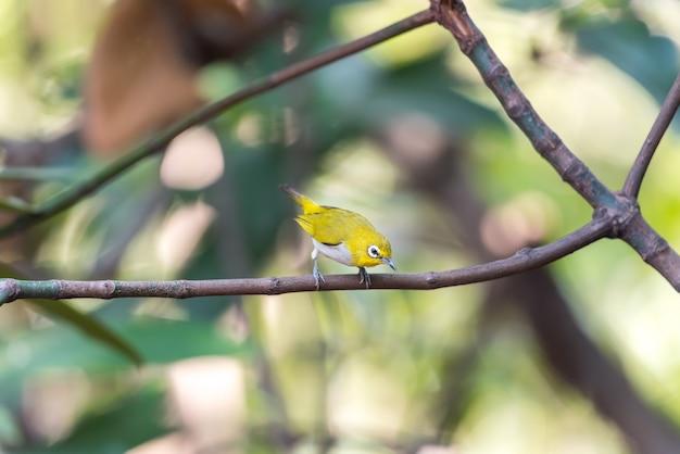 Ptak w naturze dziki