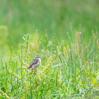 Ptak w polu trawy w słoneczny dzień