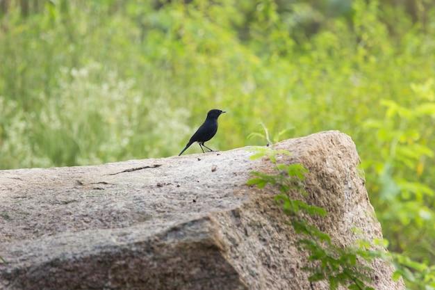 Ptak w swoim naturalnym środowisku podczas przyjemnego dnia