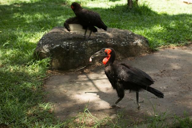 Ptak w zoo.