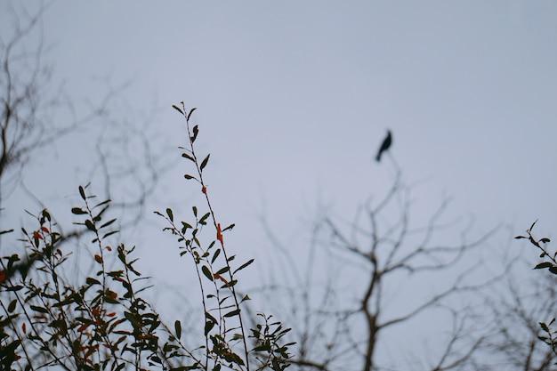 Ptak wrona na gałęziach drzewa
