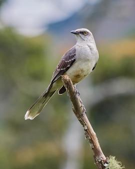 Ptak wygodnie spoczywa na pręcie drzewnym