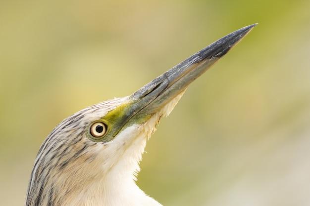 Ptak z bliska