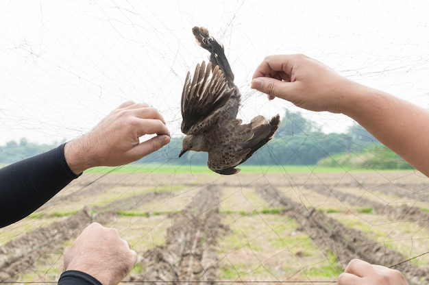 Ptak został złapany przez ogrodnika za rękę trzymającą siatkę na białym tle, nielegalna pułapka na ptaki