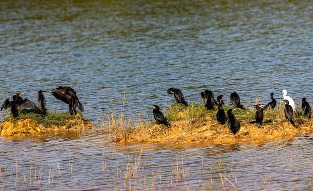 Ptaki duża grupa latająca migrująca nad wschodem słońca i niebieskim tłem nieba