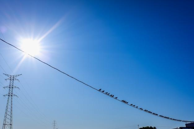 Ptaki i mewy umieszczone na elektrycznych kablach wysokiego napięcia, z niebieskim tłem.