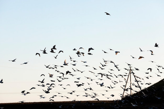Ptaki latające po niebie, zbliżenie błękitne niebo, w którym stado ptaków latających, widoczne sylwetki, w ciągu dnia,