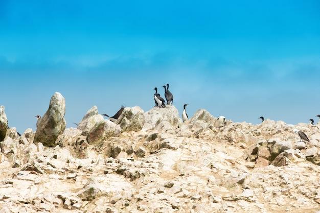 Ptaki morskie na skale na wyspie ballestas, park przyrody. peru