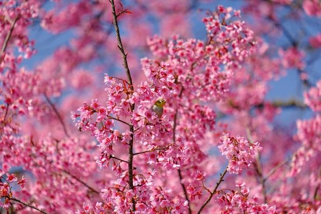 Ptaki na gałęzi wiśniowego drzewa