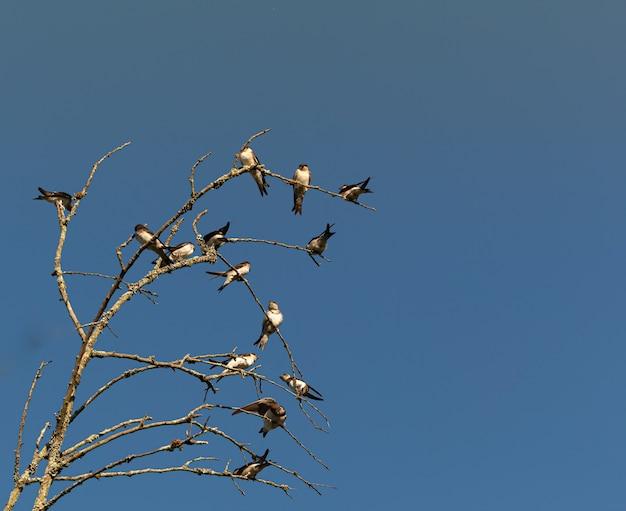 Ptaki Na Gałęziach Drzew W Ciągu Dnia Premium Zdjęcia