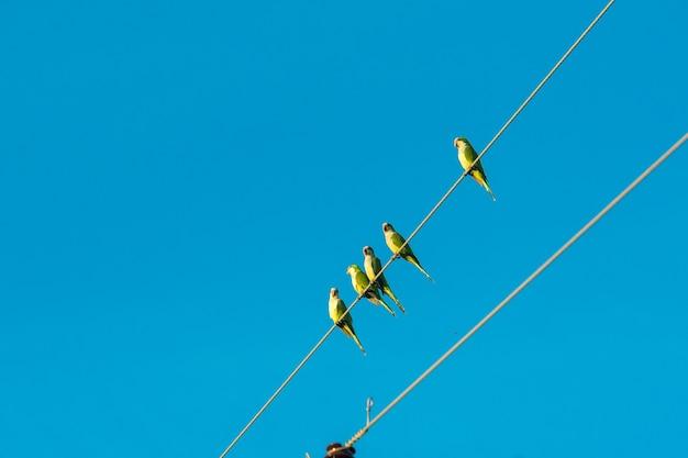 Ptaki na mokradłach mato grosso pocone mato grosso brazylia