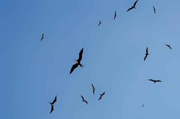 Ptaki na niebieskim niebie