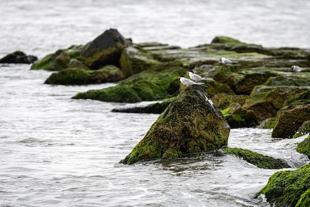 Ptaki na skałach pokrytych trawą morską i błotem na wybrzeżu oceanu