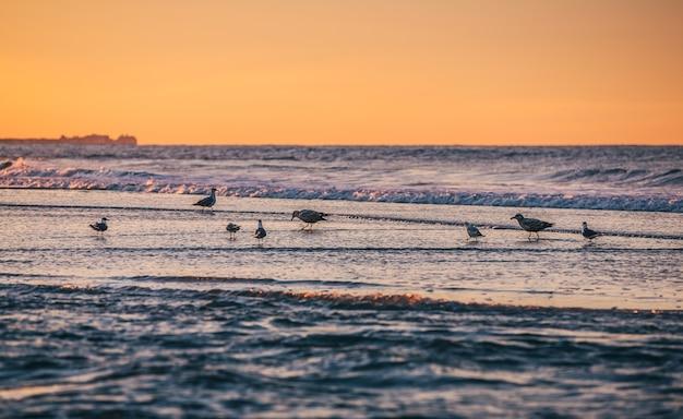 Ptaki nad oceanem. wybrzeże oceanu atlantyckiego w pobliżu nowego jorku w rejonie rockaway park
