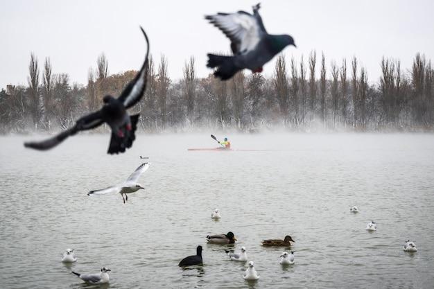 Ptaki odlatują. na jeziorze kajakarz wioślarski.