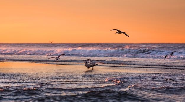 Ptaki wcześnie rano nad oceanem. wybrzeże oceanu atlantyckiego w pobliżu nowego jorku w rejonie rockaway park