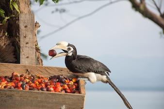 Ptaki z rogami stoją na talerzu z jedzeniem