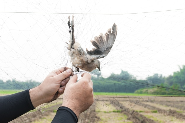 Ptaki zostały złapane przez ogrodnika trzymającego rękę na siatce na białym tle