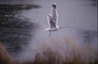 Ptaków, w powietrzu