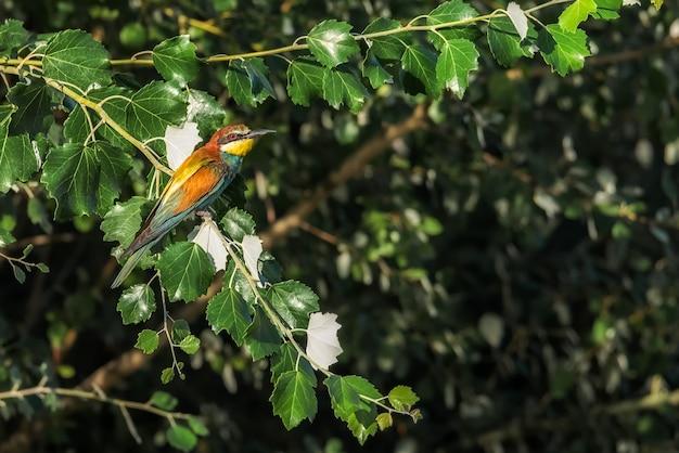 Ptasia pszczoła umieszczająca na gałąź drzewo