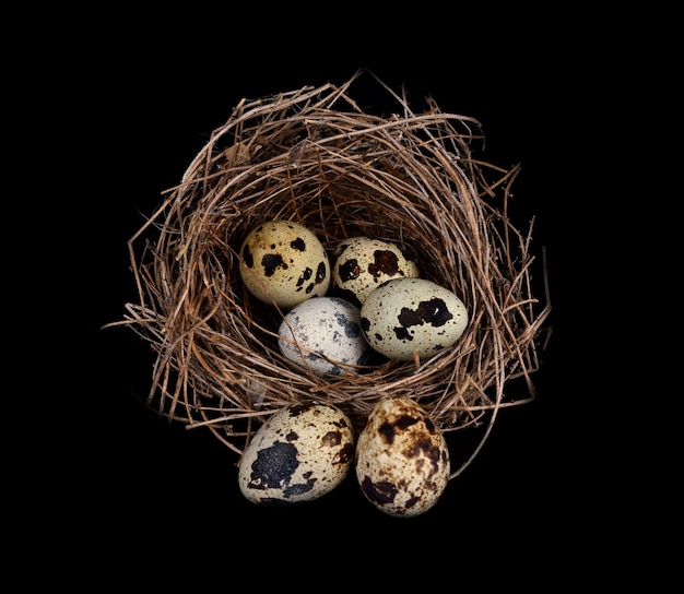 Ptasie gniazdo na czarno