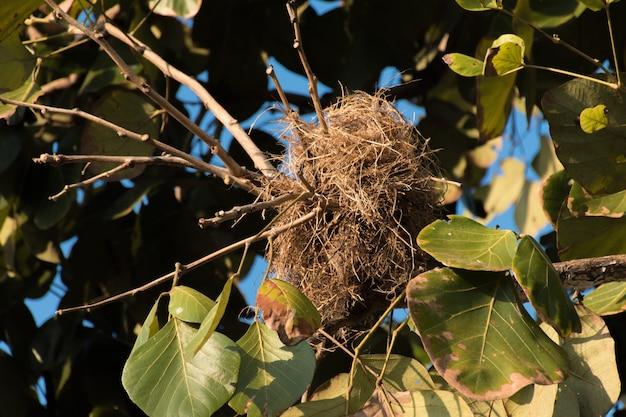 Ptasie gniazdo na drzewie