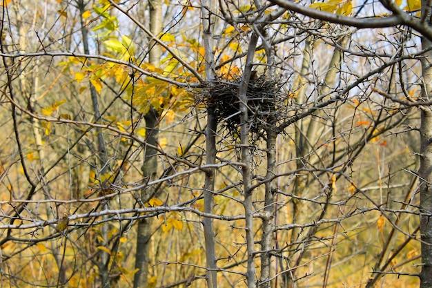 Ptasie gniazdo w jesiennym lesie