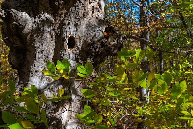 Ptasie gniazdo w pniu drzewa