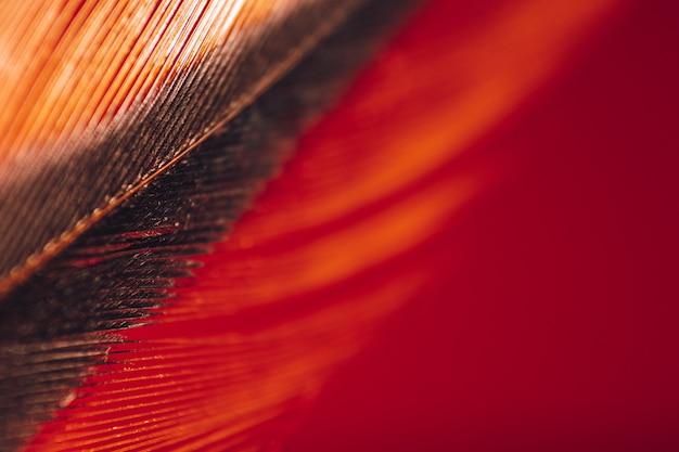 Ptasie pióro na czerwonym tle makro