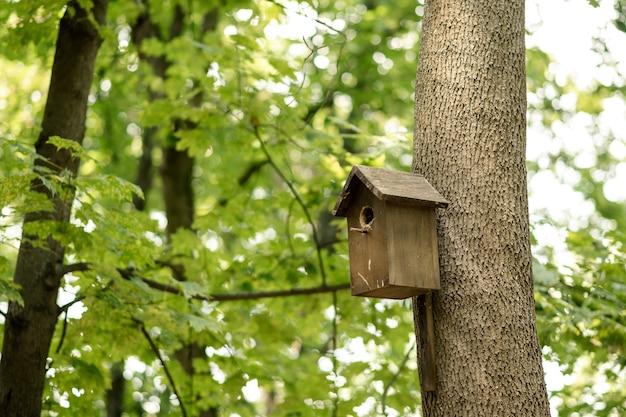 Ptaszarnia na drzewie w zielonym lesie.