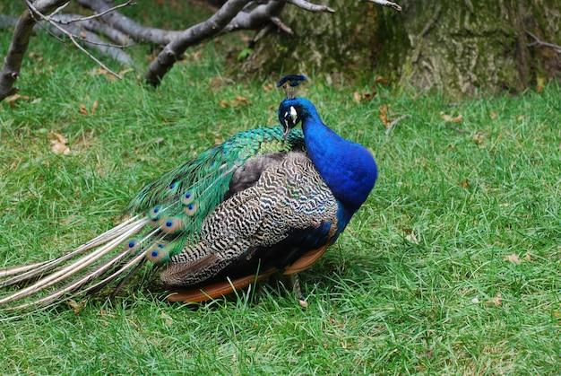 Ptaszek czyści i czesze swoje pióra.