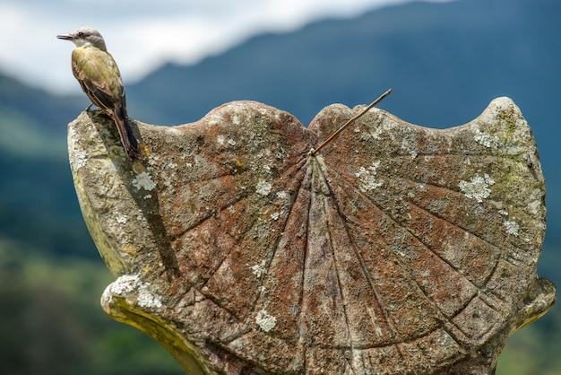 Ptaszek na starym i omszonym zegarze słonecznym w historycznym mieście tiradentes, minas gerais, brazylia