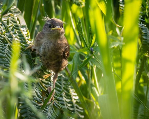 Ptaszek skanuje horyzont w poszukiwaniu owadów