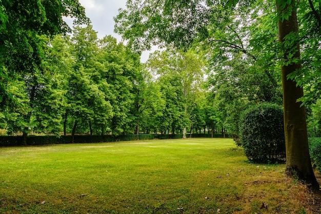 Publiczny park z ogromnymi drzewami i zieloną łąką do odpoczynku i spacerów