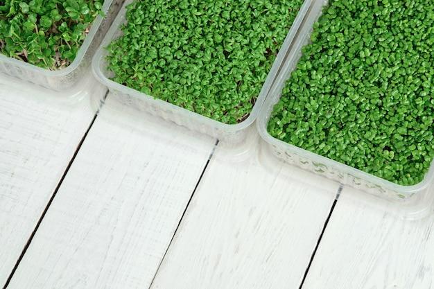 Pudełka z microgreens rukwi wodnej, rzodkiewki i brokułów na białym stole. koncepcja zdrowego stylu życia i domowego ogrodnictwa